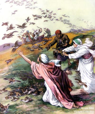exodus-16-12