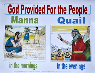 manna-quail-visual_crop