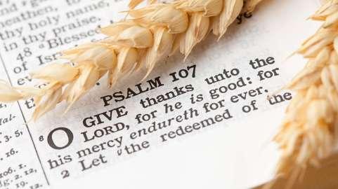 Thanksgiving 8